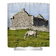 A Horse Grazing In A Field Shower Curtain