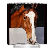 A Horse Is A Horse Of Course By Diana Sainz Shower Curtain