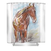 A Horse Looks Back Shower Curtain