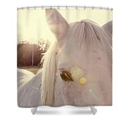 A Horse's Eyes Shower Curtain