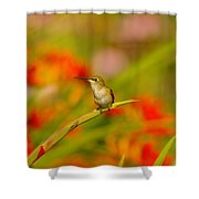 A Humming Bird Perched Shower Curtain