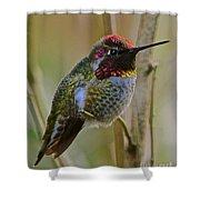 A Hummingbird Rainbow Shower Curtain