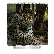 A Jaguar's Gaze Shower Curtain