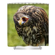 A Juvenille Peregrine Falcon Shower Curtain