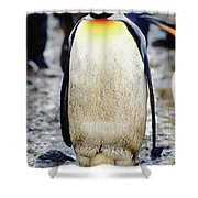 A King Penguin Holds Its Egg Shower Curtain