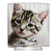 A Kittens Helping Hand Shower Curtain