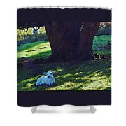 A Lamb In Wales Shower Curtain