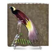 A Large Bird Of Paradise Shower Curtain