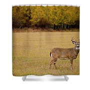 A Large Whitetail Buck Stairs Shower Curtain
