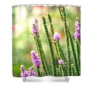 A Lavender Garden Shower Curtain