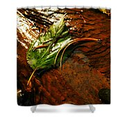 A Leaf Washed Over Shower Curtain by Jeff Swan