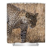 A Leopard, Panthera Pardus Shower Curtain