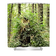 A Leprechaun's Hideout Shower Curtain