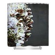A Lichen Abstract 2013 Shower Curtain