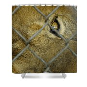 A Lions Eye Shower Curtain