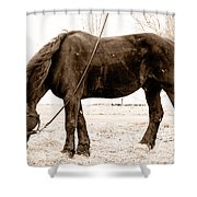A Little Hay Shower Curtain