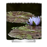 A Little Lavendar Water Lily Shower Curtain