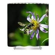 A Little Nectar Seeking Fruit Fly Shower Curtain