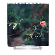 A Little Peach Flower Bud Shower Curtain