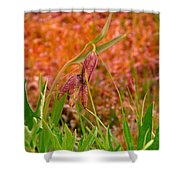 A Little Spring Miracle Shower Curtain
