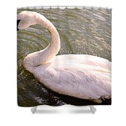 A Lone Swan Named Gracie Shower Curtain