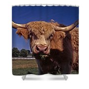 A Lot A Bull Shower Curtain by Skip Willits