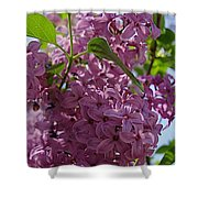 A Lovely Color Shower Curtain