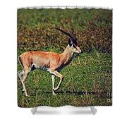 A Male Impala In Ngorongoro Crater. Tanzania Shower Curtain