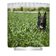 A Military Working Dog Sits In A Field Shower Curtain by Stocktrek Images