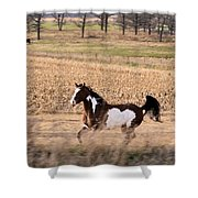A Moment Of Freedom Shower Curtain