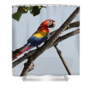 A Moment Of Rest Shower Curtain