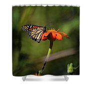 A Monarch Butterfly 1 Shower Curtain