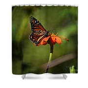 A Monarch Butterfly 2 Shower Curtain