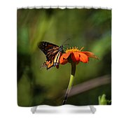 A Monarch Butterfly 3 Shower Curtain
