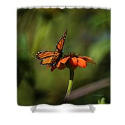 A Monarch Butterfly 4 Shower Curtain