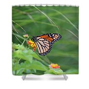 A Monarch Butterfly At Rest Shower Curtain
