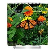 A Monarchs Colors Shower Curtain