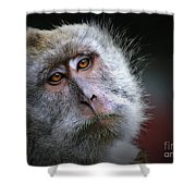 A Monkey's Look Shower Curtain