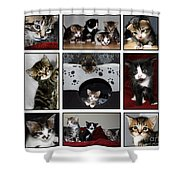 A Montage Of Kittens Shower Curtain