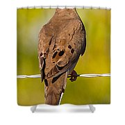 A Morning Dove Shower Curtain