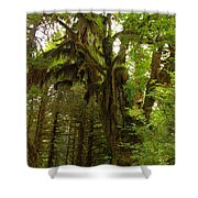 A Moss Covered Tree  In The Ho National Rain Forest Shower Curtain