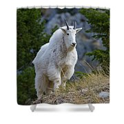 A Mountain Goat Stands On A Grassy Shower Curtain