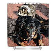 A Mouse On A Cat On A Dog In Santa Shower Curtain