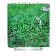 A Mushroom Sprouts Shower Curtain