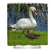 A Mute And Mallards Shower Curtain