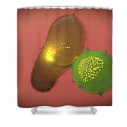 A Natural Killer Cell Injects Toxin Shower Curtain by Stocktrek Images