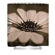 A New Life Shower Curtain