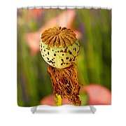 A New Purpose  Shower Curtain