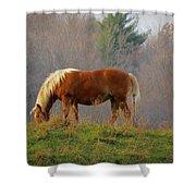 A November Horse Shower Curtain