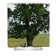 A One Horse Tree And Its Horse Shower Curtain